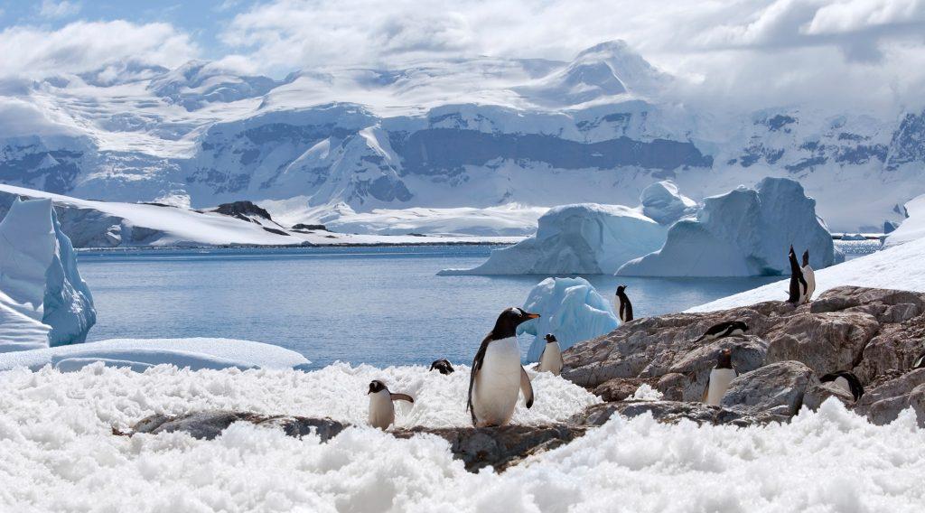 South Pole Penguins