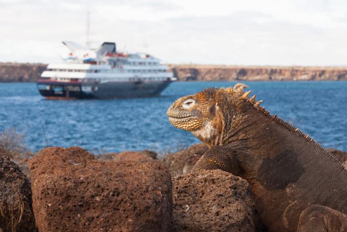 Galapagos iguana sitting on a rock