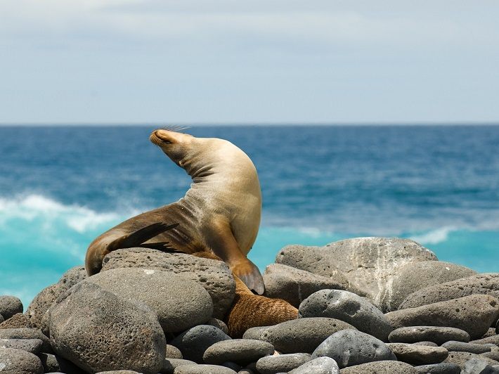 Galapagos sea lion basking on the beach during a cruise