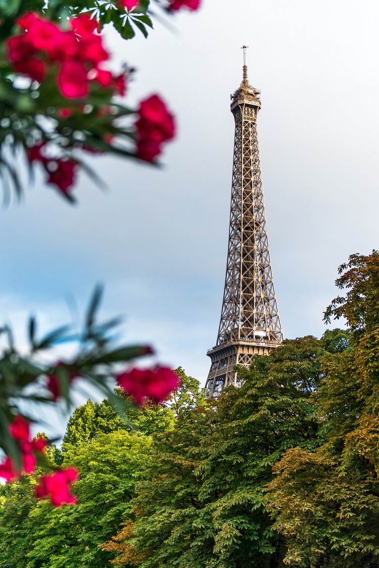 The Eiffel Tower seen from behind a rose bush, rising above the treetops