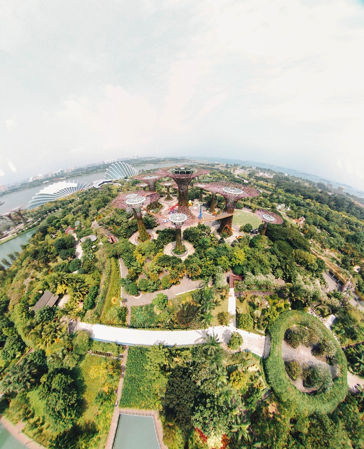 Aerial shot over the lush vegetation and super trees at Gardens by the Bay in Singapore
