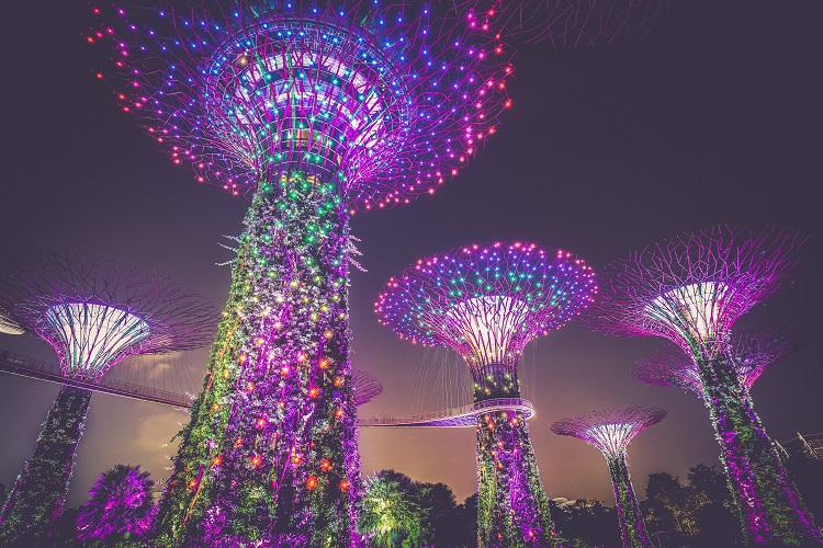 Bright purple supertrees at Singapore's Gardens by the Bay