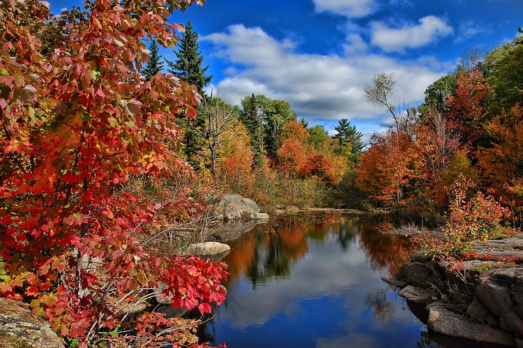 Fiery autumn trees bordering a river in New Brunswick in Canada