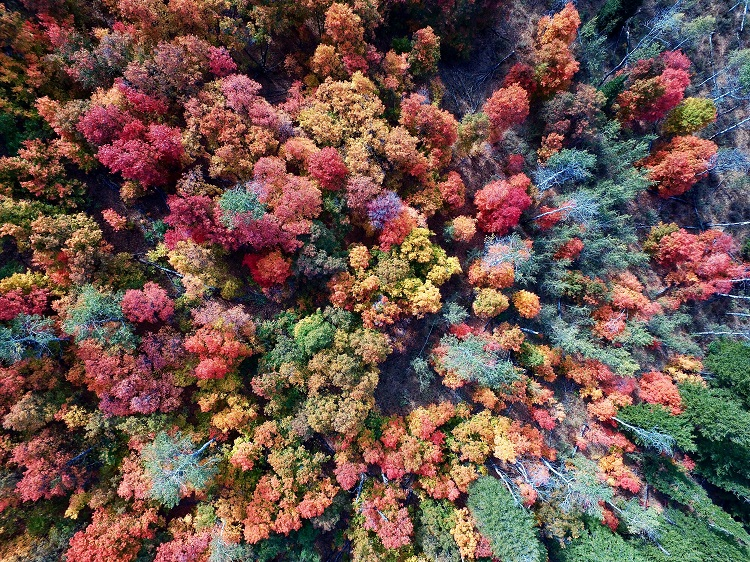 Aerial shot of multi-coloured autumn trees in Newfoundland, Canada