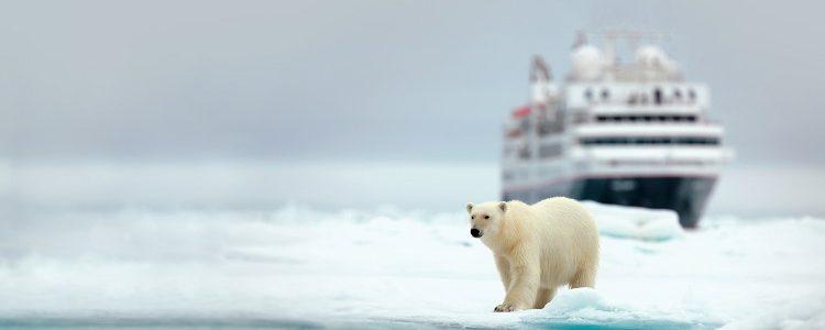A Silversea expedition cruise ship behind a polar bear in the Arctic
