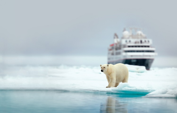 A Silversea expedition cruise ship behind a polar bear in the Arctic