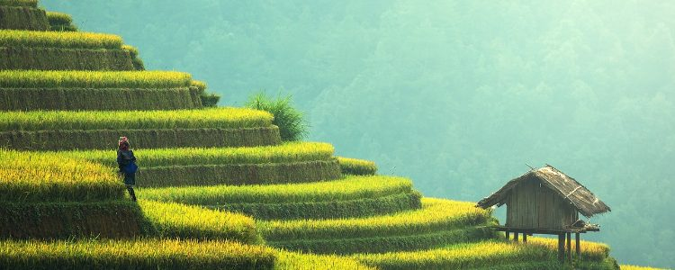 Picturesque rice fields in Asia