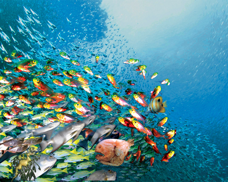A group of brightly coloured Caribbean fish seen during a scuba dive