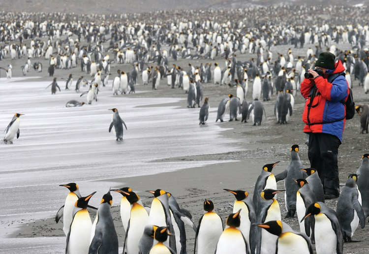 A Silversea expedition guest taking pictures of penguins in Antarctica