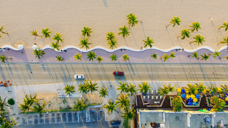 Cars driving alongside a Florida beach lined with palm trees