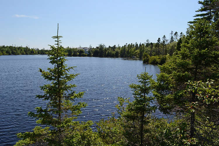 Lake surrounded by pine trees in Nova Scotia