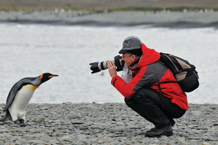 Silversea expedition guest taking pictures of a penguin in Antarctica