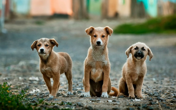 Puppies at a dog rescue where guests can volunteer on Asia cruises