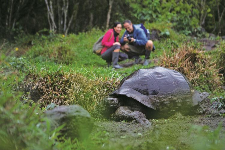 Galapagos - Giant tortoise