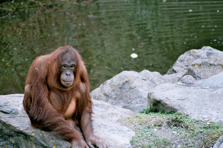 Orangutan Sanctuary - Wildlife