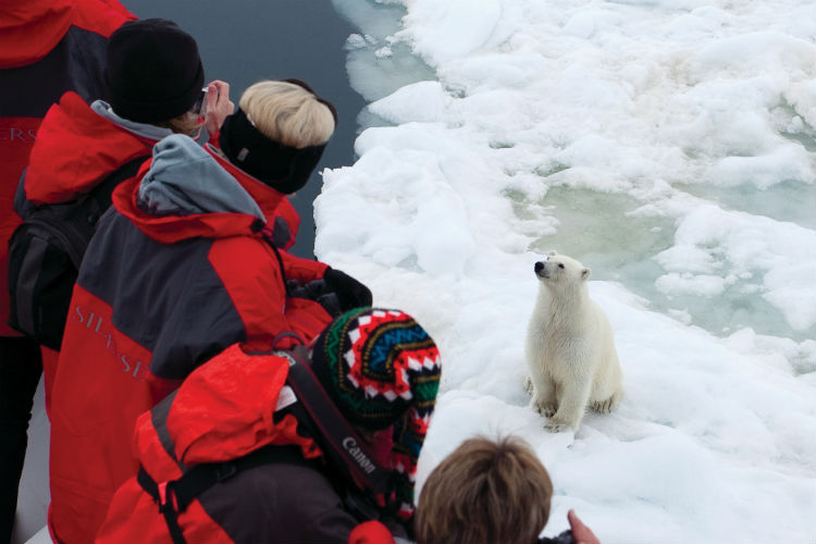 Silversea Expedition - Polar bear