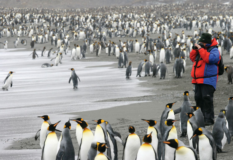 Penguin colony - Silversea Expedition