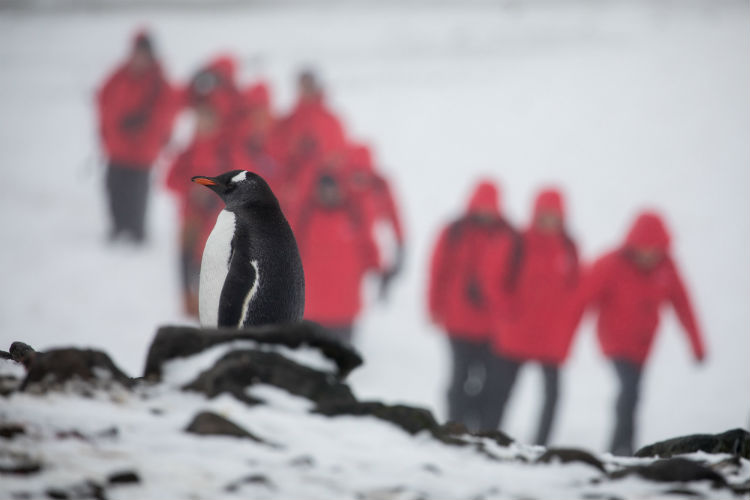 Silversea Expedition - Group with penguin in foreground
