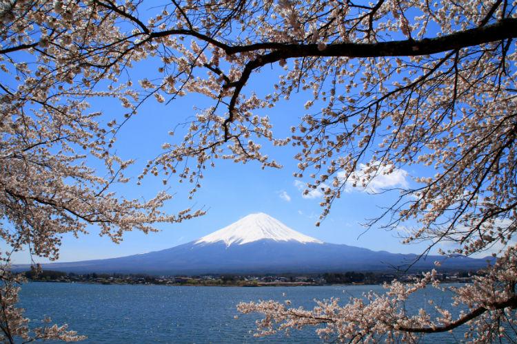 Mount Fuji - Cherry blossoms