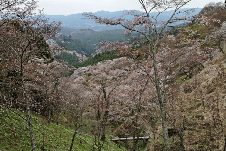 Mount Yoshino - Osaka, Japan