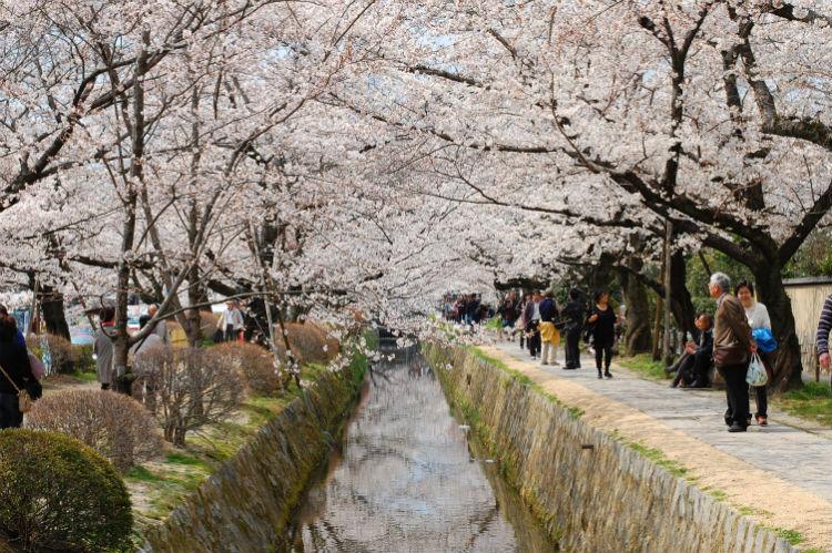 Philosopher's Path - Japan