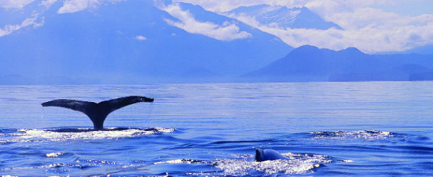Crystal Cruises Alaska SixStarCruises.co.uk