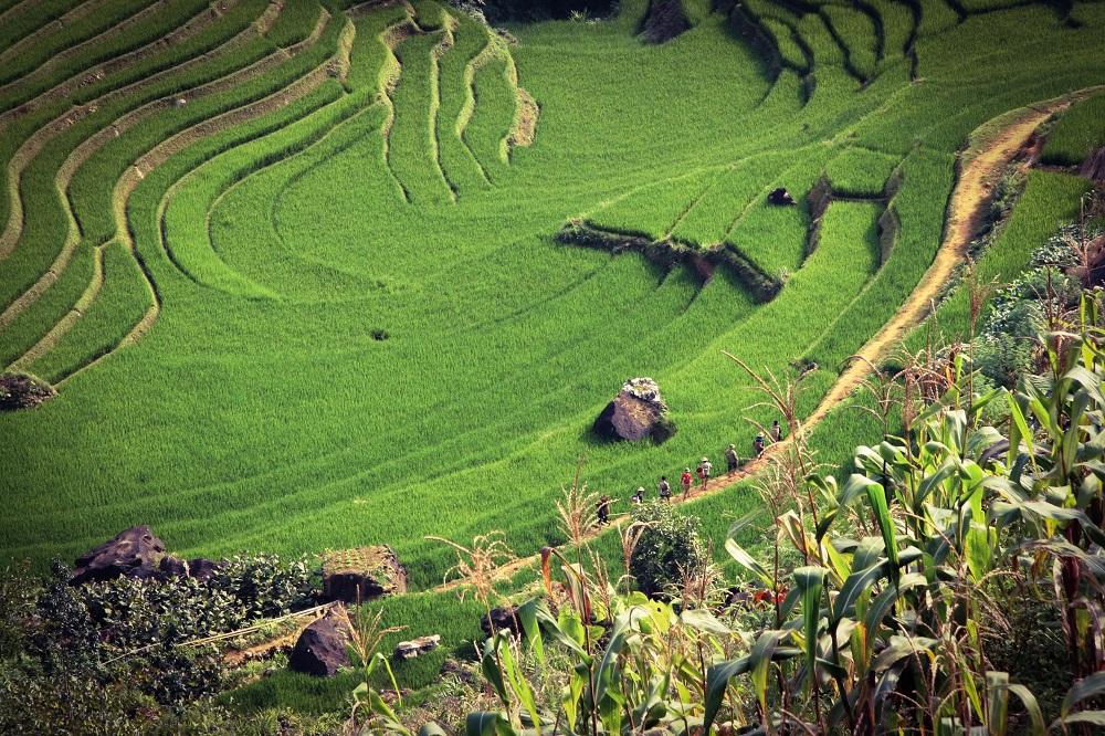 Paddy fields near a Vietnam cruise port