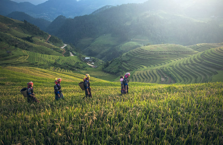 Locals working in a rice paddy field in Asia