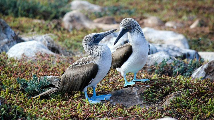Galapagos landscape - Celebrity Cruises