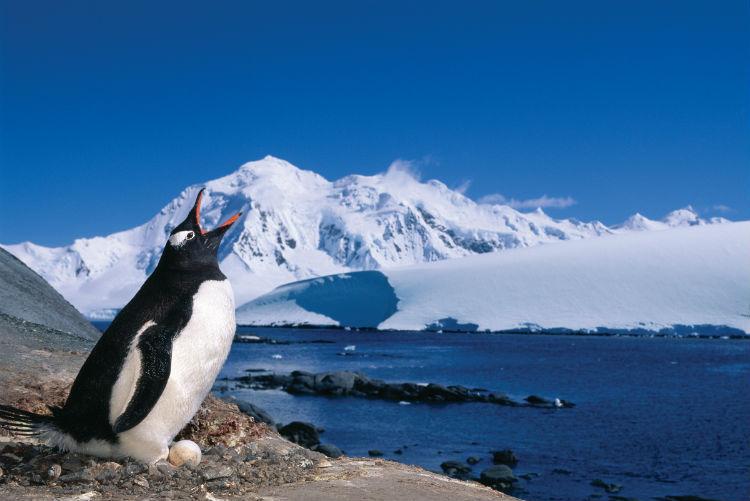 Penguin in the Antarctic - Silversea